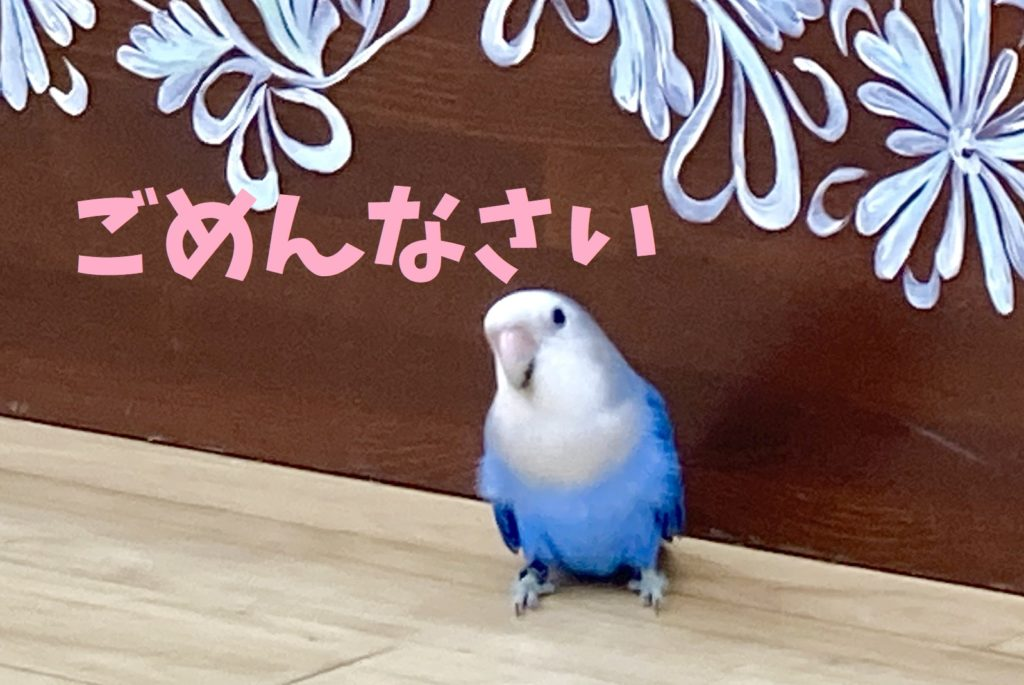 10/10(土)14:00入門クラス休講のお知らせ
